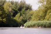 Canoes at reed beds
