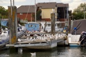 Gulls on pontoon