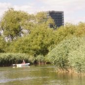 Rowing boat and reeds