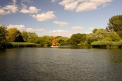 Sailing dinghy and reeds